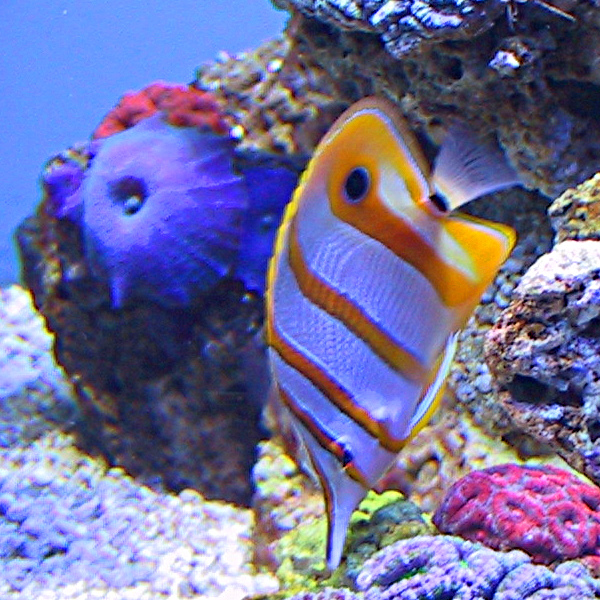 A picture of a bright colored fish (ID3 Picture Type #17) and perhaps something more